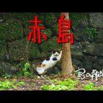 【赤島(長崎県五島市)】今は静かな島。猫も割といる