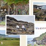 【島旅】嵯峨島さんぽ|福江島から13分の秘境|五島列島観光|VLOG
