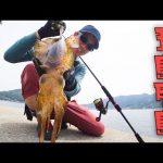 【五島列島】エギングの聖地で釣り開始!いきなり堤防でイカの大群に遭遇…。