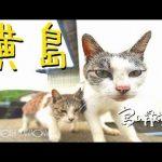 【黄島(長崎県五島市)】猫が多く、猫好きの間でひそかなブームになっている