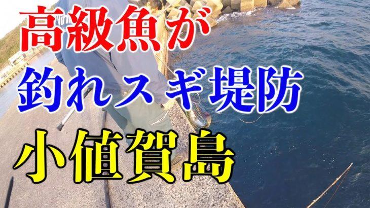 堤防ポテンシャル高過ぎ!!高級魚乱舞 【五島列島小値賀島釣り旅#1】#金楽勺 #釣り #旅